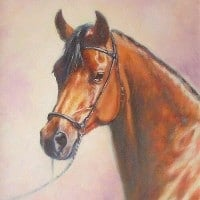 An Oil painting of an arab horse painted from a photo