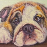 Oil pet portrait of a bullddog puppy