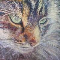 Pastel portrait of a cat's face