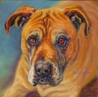 Pastel portrait of a Bull Mastiff dog