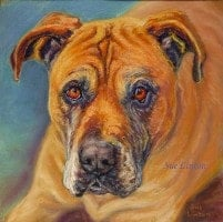 Pastel portrait of a Bull Mastiff dog