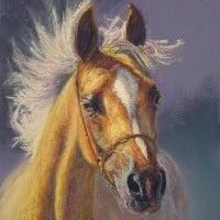 Portrait of an arab horse