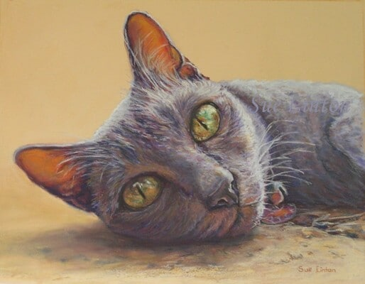 Pastel head portrait of a cat