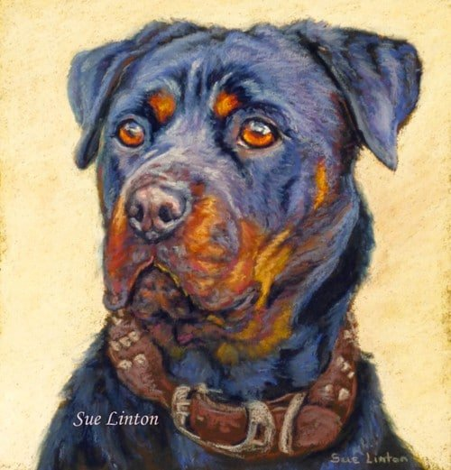 Patsel portrait of a rottwieller dog
