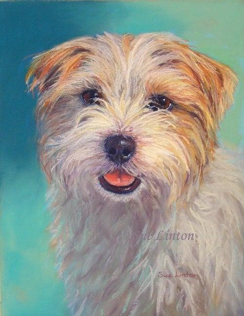 A portrait of a terrier dog