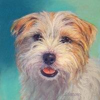 Pet portrait of a terrier dog