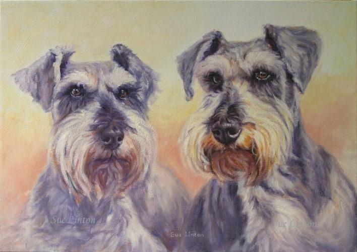 A pet portrait of 2 miniature Schnauzer dogs