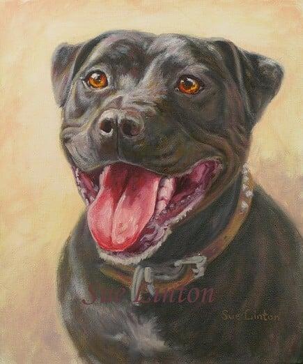 A portrait of a black Staffy terrier dog