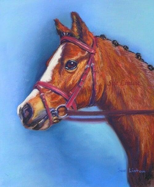A portrait of a bay pony