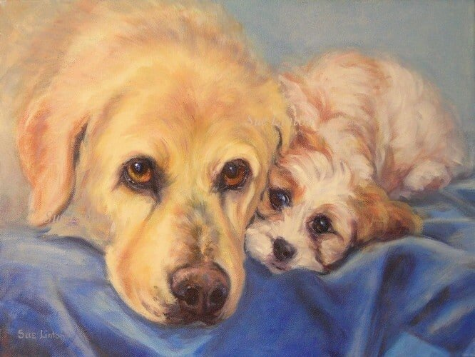 A portrait of a labrador and a puppy