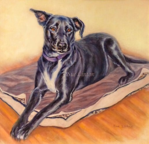 A memorial pet portrait of a black dog
