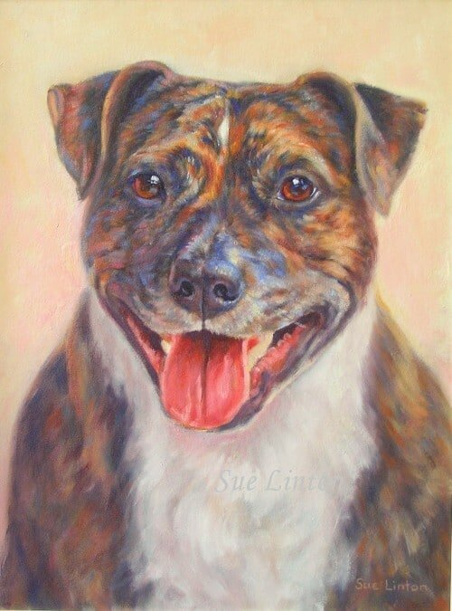 A portrait of a brindle staffy dog