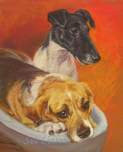 A pet portrait of a beagle and foxy dog