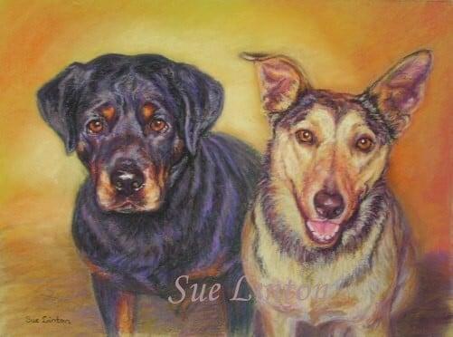 A portrait of a Rottwieller and an Alsatian Dog