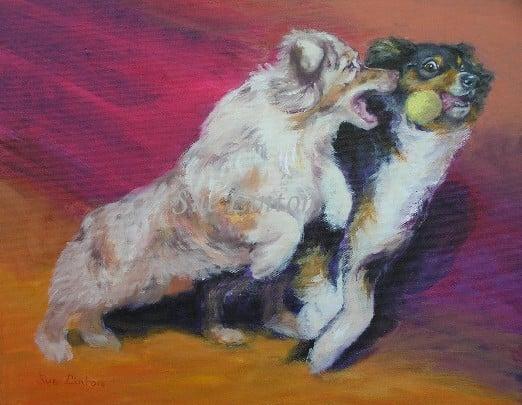 A portrait of two Australian Shepherd dogs playing catch