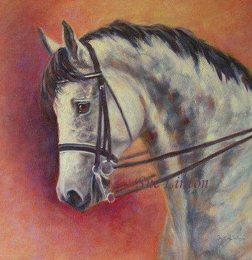 A portrait of a grey warmblood horse