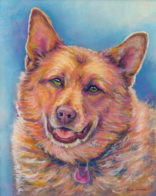 A colourful portrait of a red cattledog
