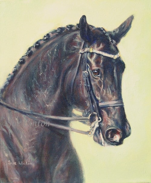 A portrait of Kaludah Renoir dressage horse