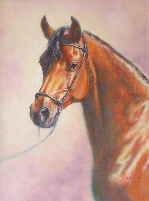 Oil portrait of a bay arab horse