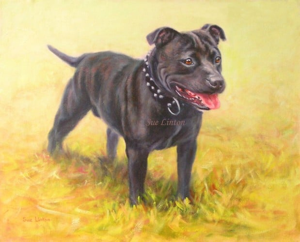 A memorial portrait of a Staffy dog lost as a result of  the Queensland floods