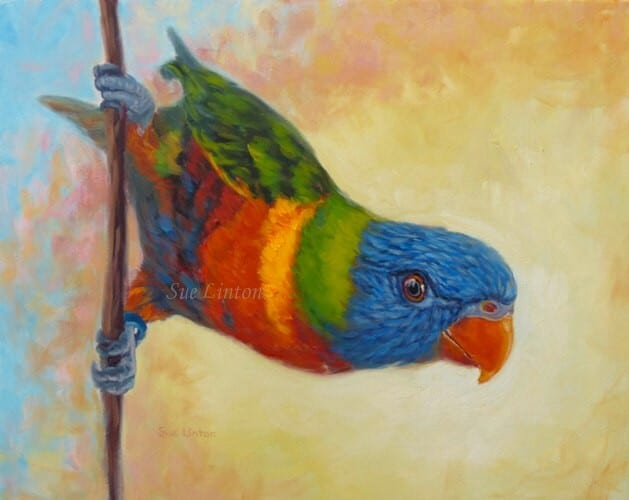 A pet  portrait of a cheeky parrot