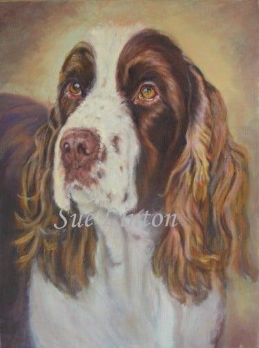 A pet portrait of a Springer Spaniel dog