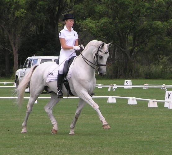 A photo of a grey dressage horse