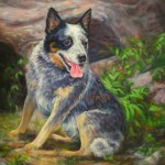 500oscarcattledog