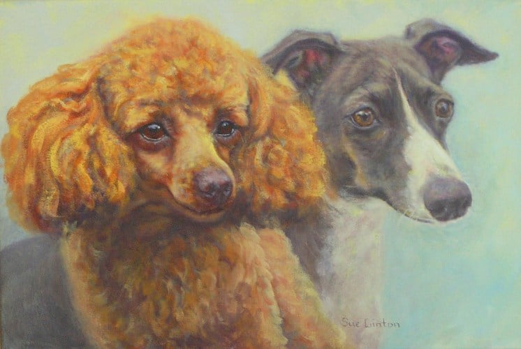 A portrait of a miniature poodle and a miniature greyhound dog