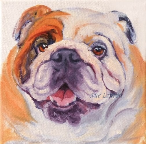 An Oil portrait of a bulldog done as a demonstration painting