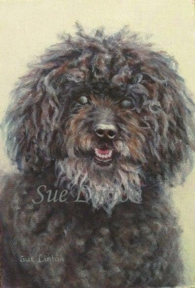 A portrait of an old black poodle