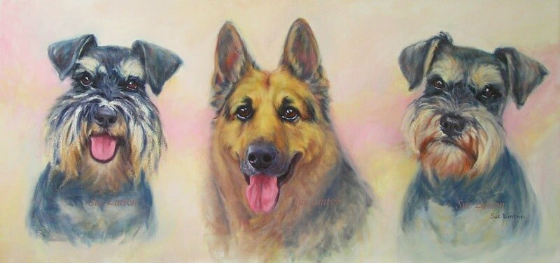 A portrait of two miniature Shnauzer dogs and an Alsatian