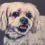 Boris 18 x 24cms image size  Framed pastel