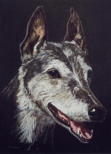 A Pastel Pencil sketch of a Greyhound dog