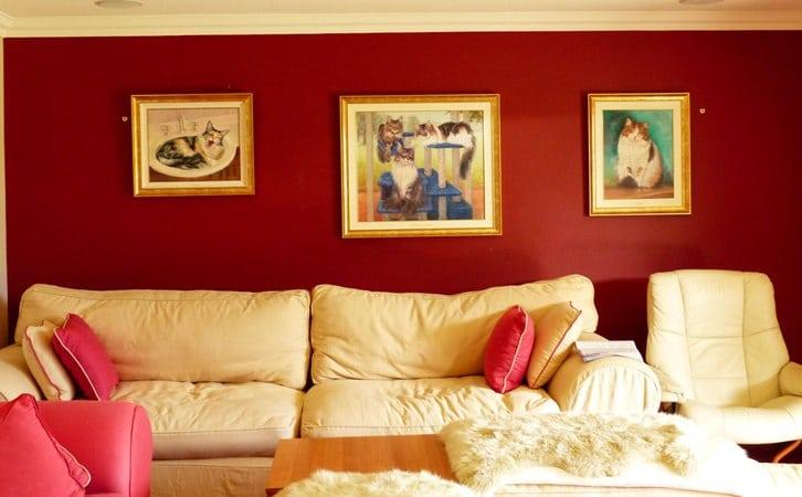 A wall of cat portraits