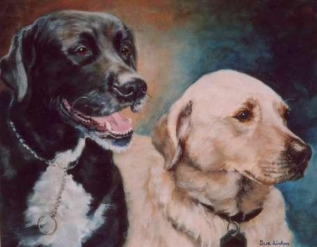 A pet portrait of a black and a cream labrador dog