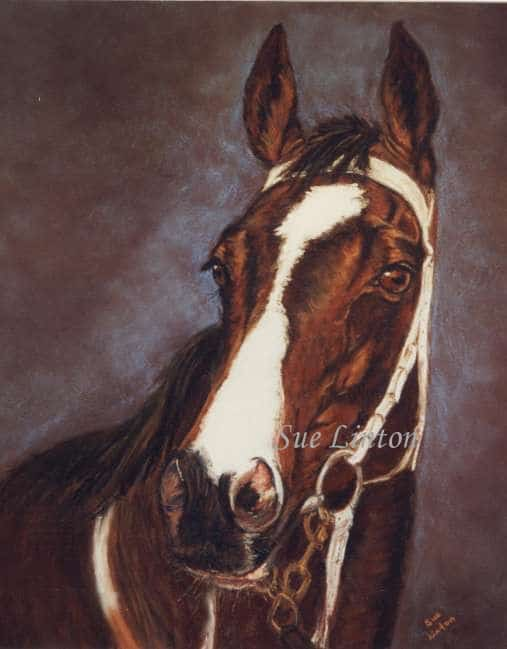A portrait of a racehorse
