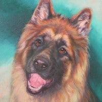 A pet portrait of a an Alasatian dog