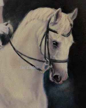 A closeup of the horses head in a 59 x 59cms image portrait