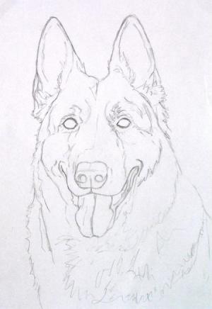 The sketch for LIz the German Shepherd
