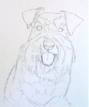 Sketch for Emma the schnauzer