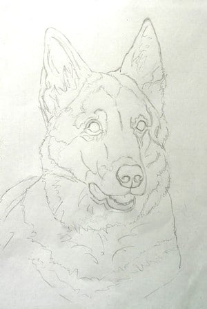 The sketch for Rex