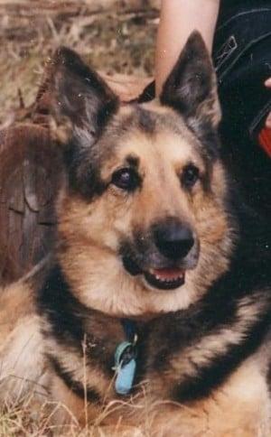 The original photo for Rex