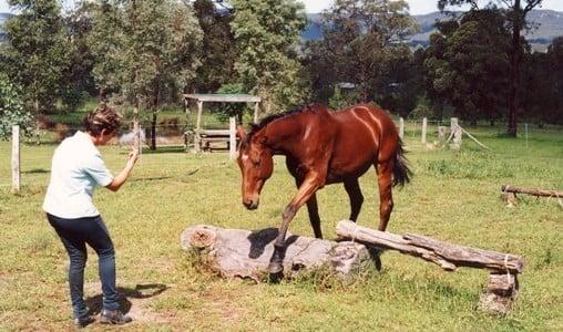 Sue doing groundwork with her horse Zeuss