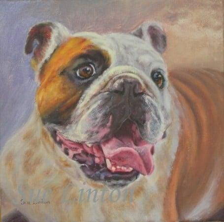A pet portrait of a bulldog