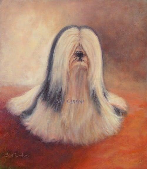 Australian pet portrait of a Lhaso Apso dog