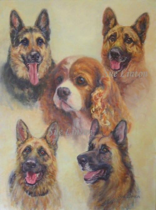 A portrait of 5 dogs