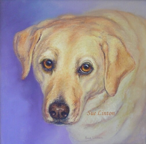 A portrait of a Labrador dog