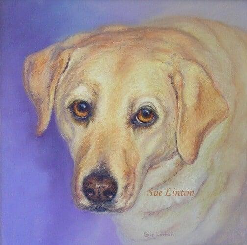 A memorial portrait of a Labrador