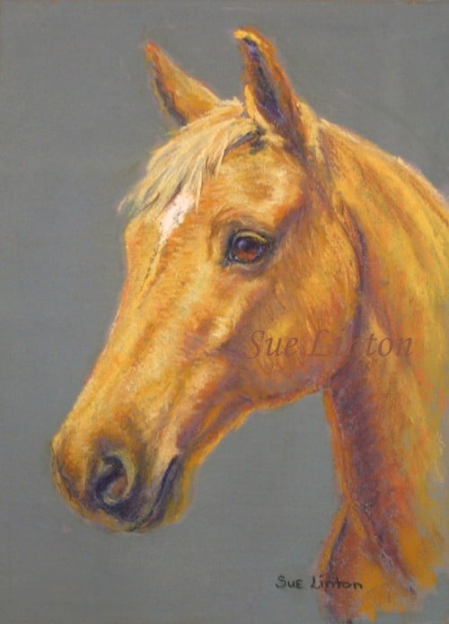 A portrait of a palomino horse